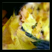 Melancholický podzim