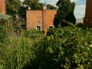 Podzimní zahrada v srpnu 2021