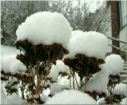 Sněhové čepice