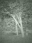 stromy-4