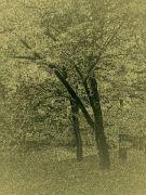 stromy-6