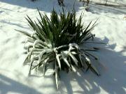 Zimní zahrada odpoledne 12. února 2021
