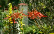 Botanická zahrada Soroa