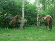 Když u nás parkují koně.