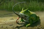 Krokodýlí žába
