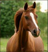 HROZNĚ krásnej kůň!!!