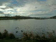 Kyjský rybník