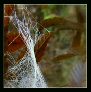 Listopad v lese III