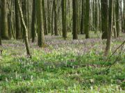 Rozkvetlý les