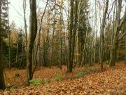 více listí na zemi...
