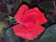 Růže v noci: Václav Kovalčík, Zlín