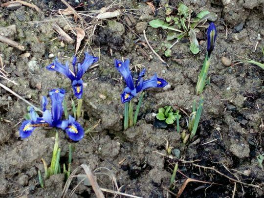 Kvetoucí irisy: Václav Kovalčík, Zlín