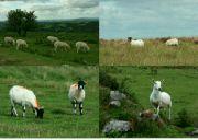 Přírodní park Dartmoor