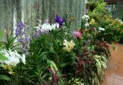 Botanická zahrada Peradeniya