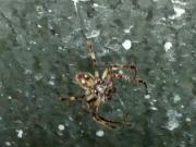 Pavouk v koupelně: Václav Kovalčík, Zlín