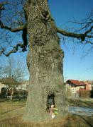 Kaplička ve stromě