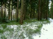 zima letos v lese