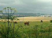 Pastviny nad Žďárem