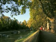 Platany u Malého Dunaje