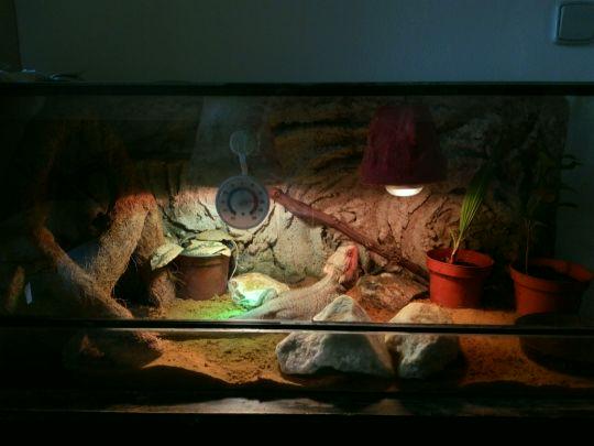 Naše lednová Agamečka