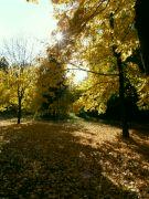 padlé listí