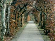 Zámecká zahrada Lysá nad Labem