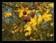 Barevný podzim I