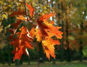 Podzim ve Stromovce