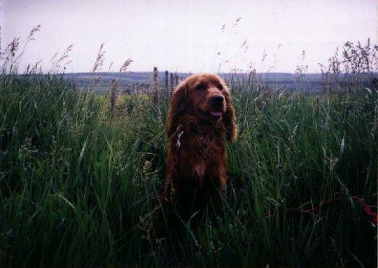 Dášenka 2001