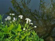 U potoka