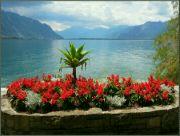 Ženevské jezero VI