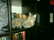 Mourek čtenář