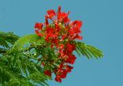 Květ stromu