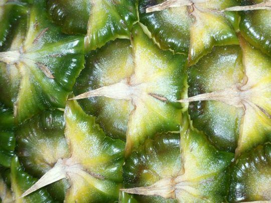 Architektura ananasu: Václav Kovalčík
