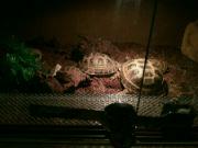 Želvy ze zverimexu