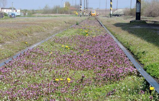 Jaro na kolejích