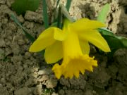 Kvetoucí narcis: Václav Kovalčík, Zlín