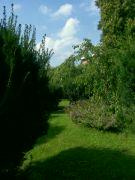 Fotografie z Lesoparku...