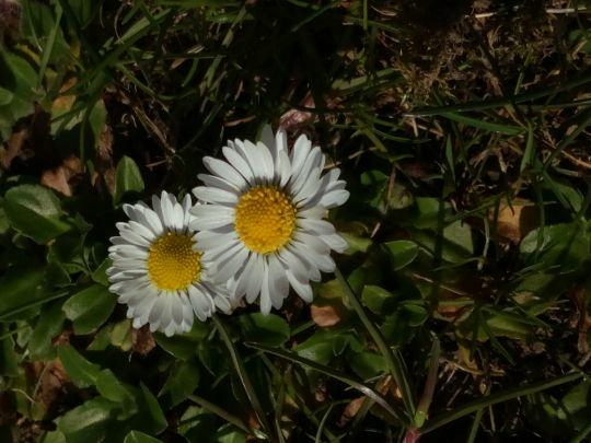 Kvetoucí sedmikrásky: Václav Kovalčík