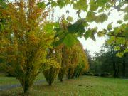 vybarvení ztepilých stromů