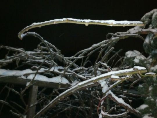 Zimní zahrada  v noci 10. února 2021
