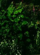 Zahrada Raisovy ulice