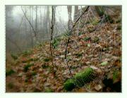 Les v listopadu IV
