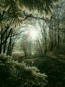 světlo v dálce