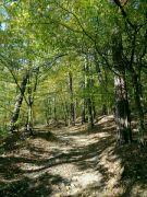 Les Na Rovínku
