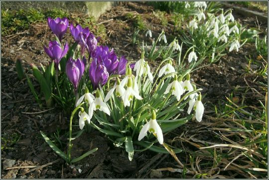 Jaro v Železné Rudě