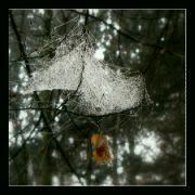 Listopad v lese I