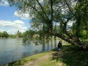Břevský rybník