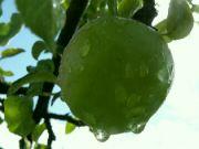 jablko po sprše