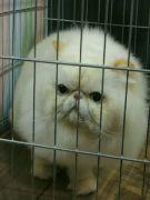 Kočka 6